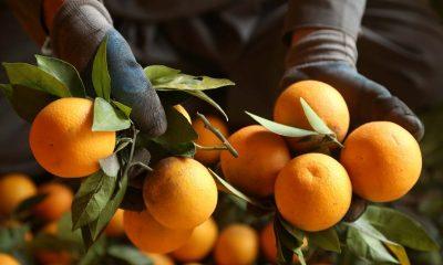 Appelsiinit ja ilmapallot kannattaa pitää eri huoneissa