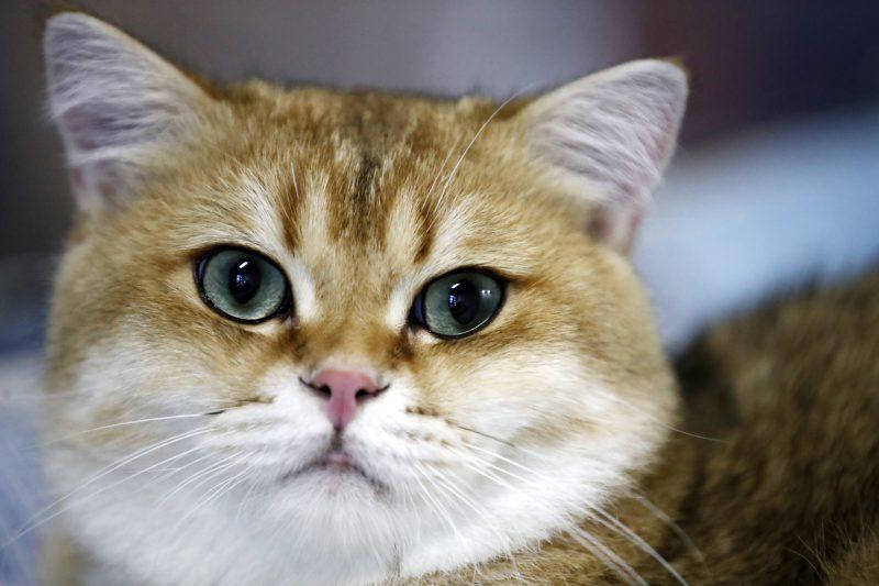 Cooter-kissa, joka osaa puhua