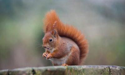 Orava varastoi autoon lähes 160 litraa pähkinöitä - uskomaton näky hämmästyttää somessa